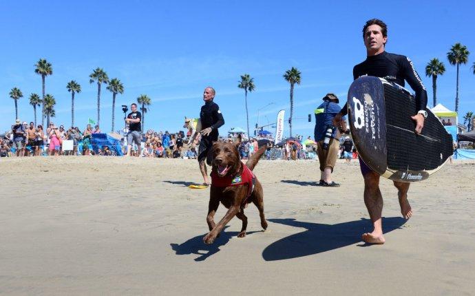 Собачий серфинг в Калифорнии :: NoNaMe